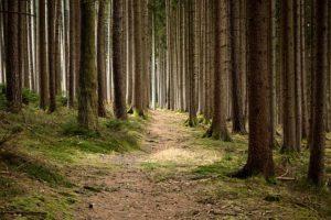 Wald, Papierverbrauch, Umweltschutz, Bonpflicht